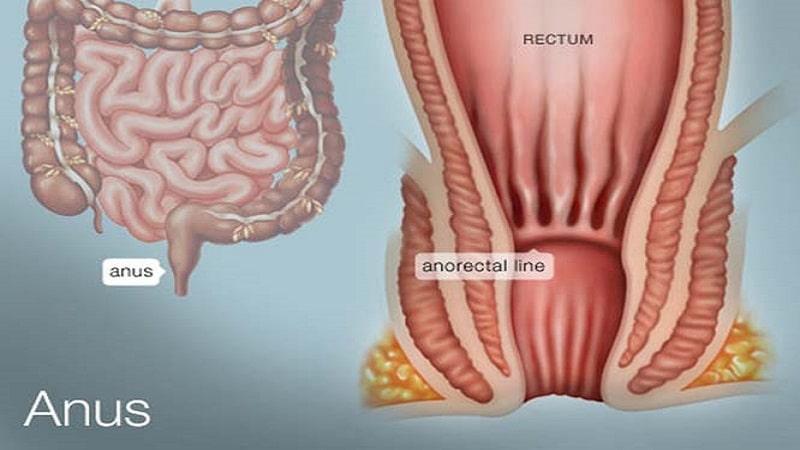 ساختار و عملکرد مقعد و بیماری های مقعدی و نشیمنگاهی