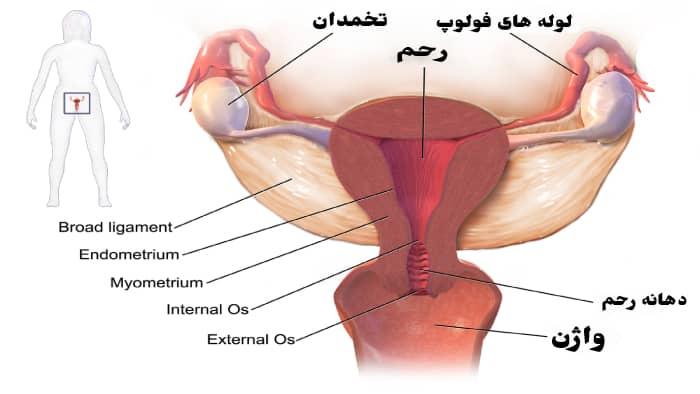 مشخصات واژن خوب